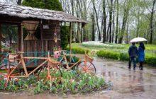 بارش باران تابستانی سبب خوشحالی مردم برخوار، شاهینشهر و میمه شد