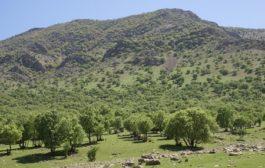 برداشت بی رویه از مراتع و قطع درختان از مشکلات اصلی محیط زیست ایلام است