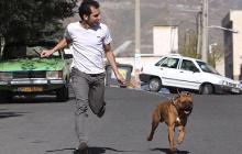 سپاه معضل سگ گردانی و قلیان را در شاهینشهر کنترل کرد