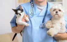 اصول نگهداری از حیوانات خانگی در شرایط کرونایی